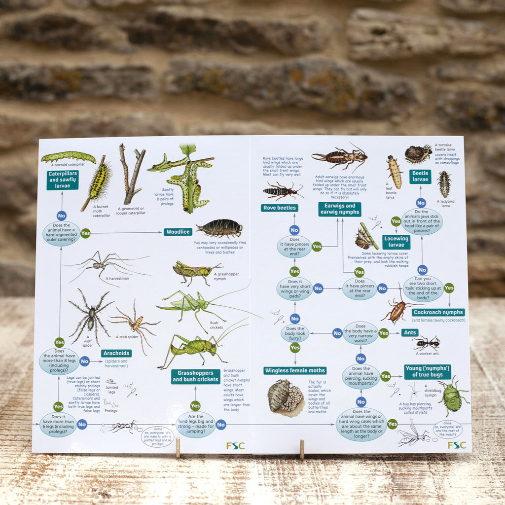 Buy Bugs on Bushes Field Guide online
