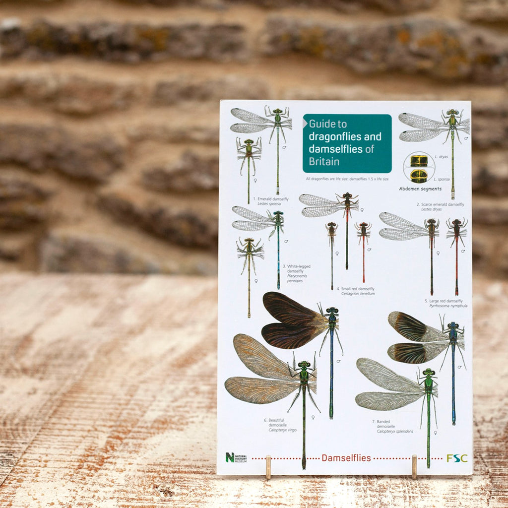 Field Guide Dragonflies and Damselflies of Britain