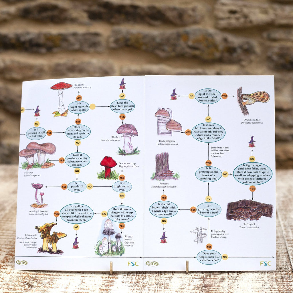 Buy Fungi Name Trail Field Guide online