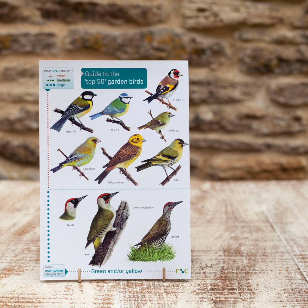 Field Guide Top 50 Garden Birds