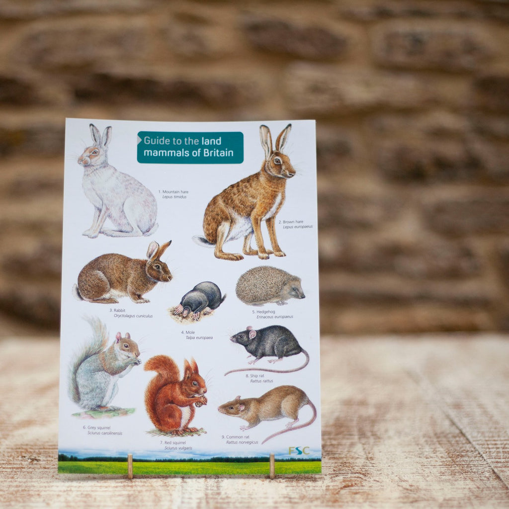 Field Guide Land Mammals of Britain