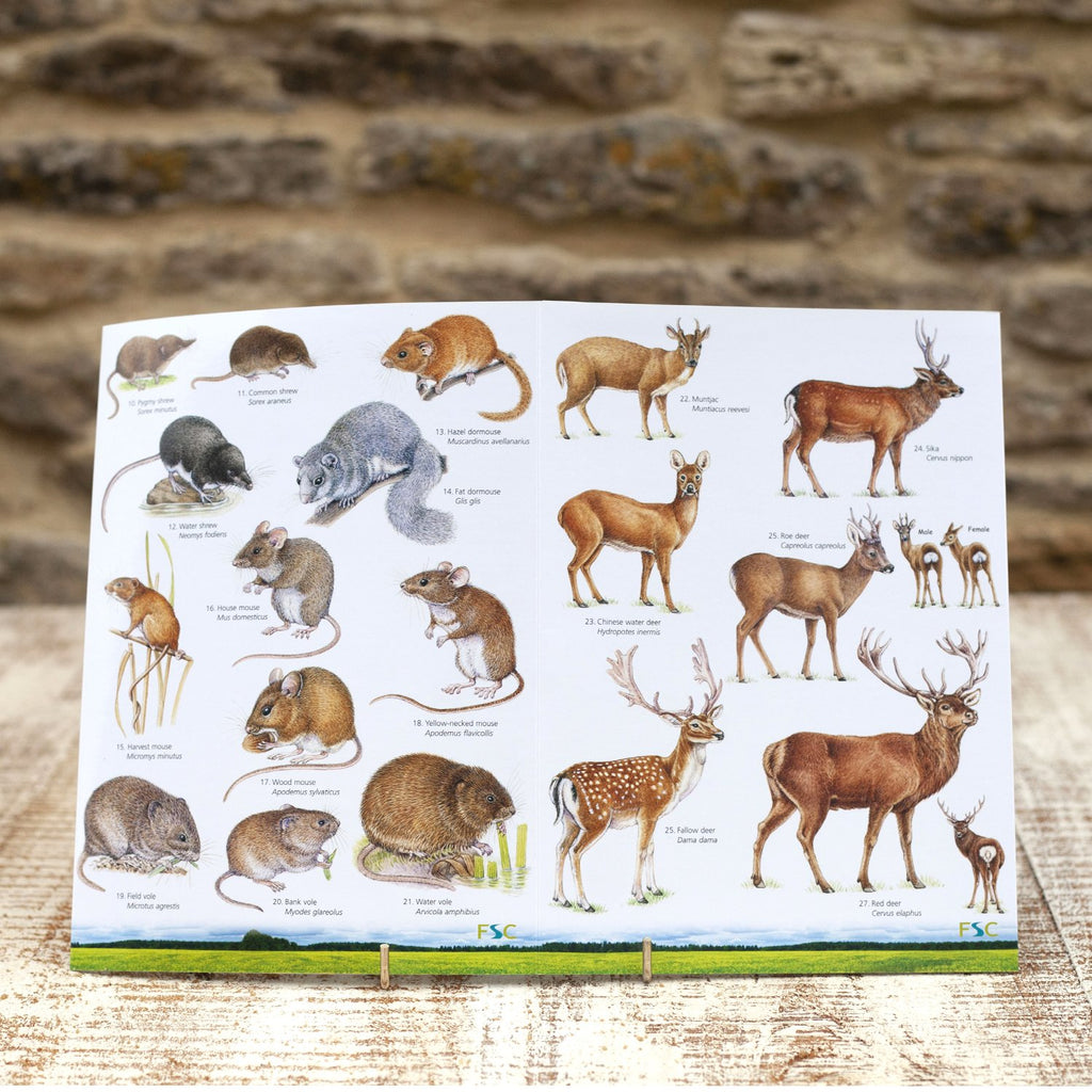 Buy Land Mammals of Britain Field Guide online