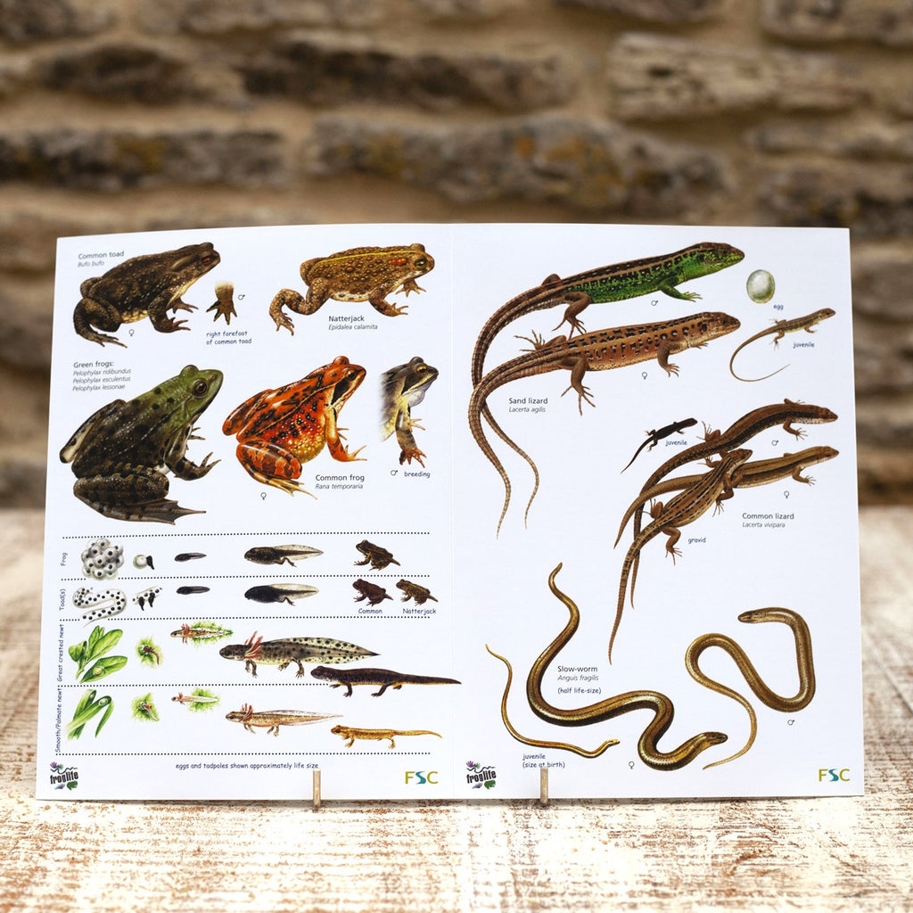Buy Reptiles and Amphibians Field Guide online