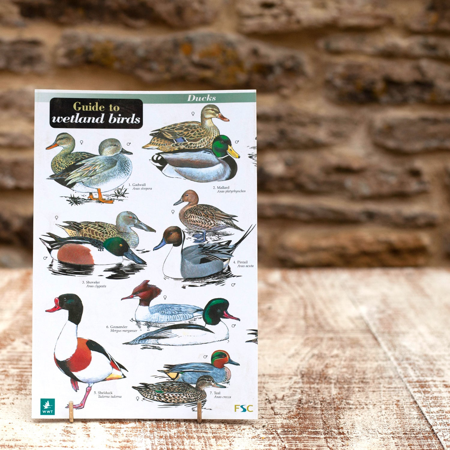 Field Guide - Wetland Birds | Wildlife World