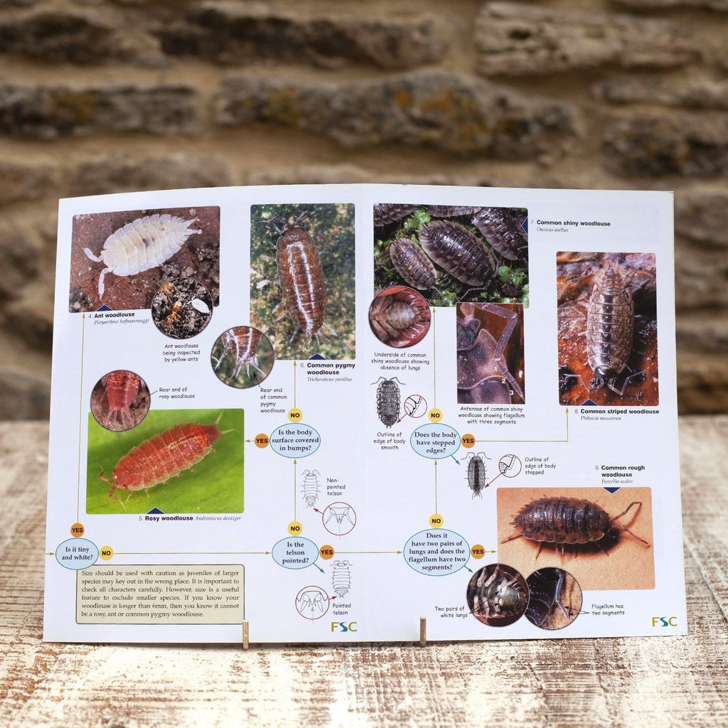 Buy Woodlouse Name Trail Field Guide online