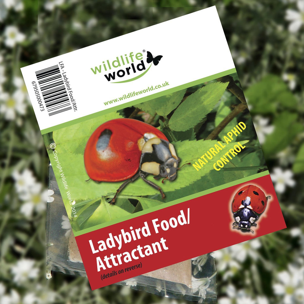 Wildlife World Ladybird Food/Attractant