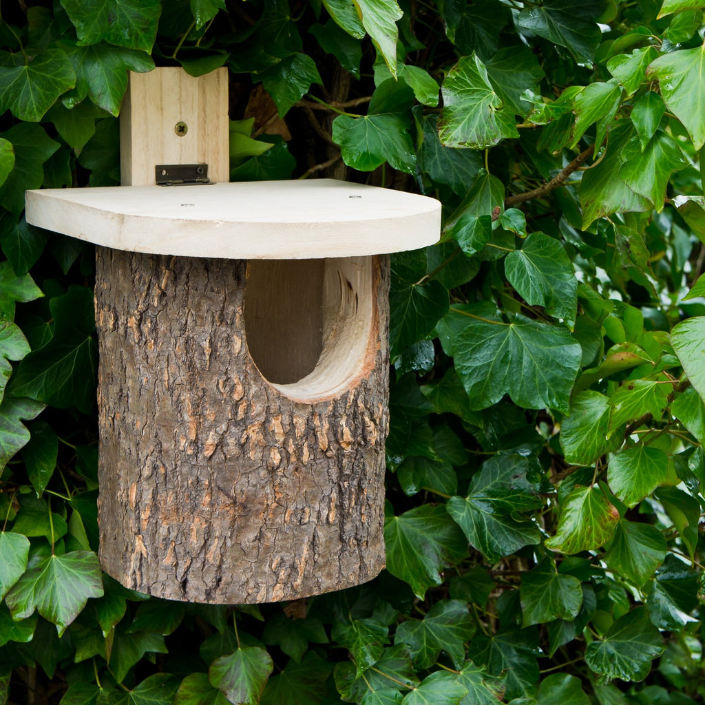 Natural Log Robin Box
