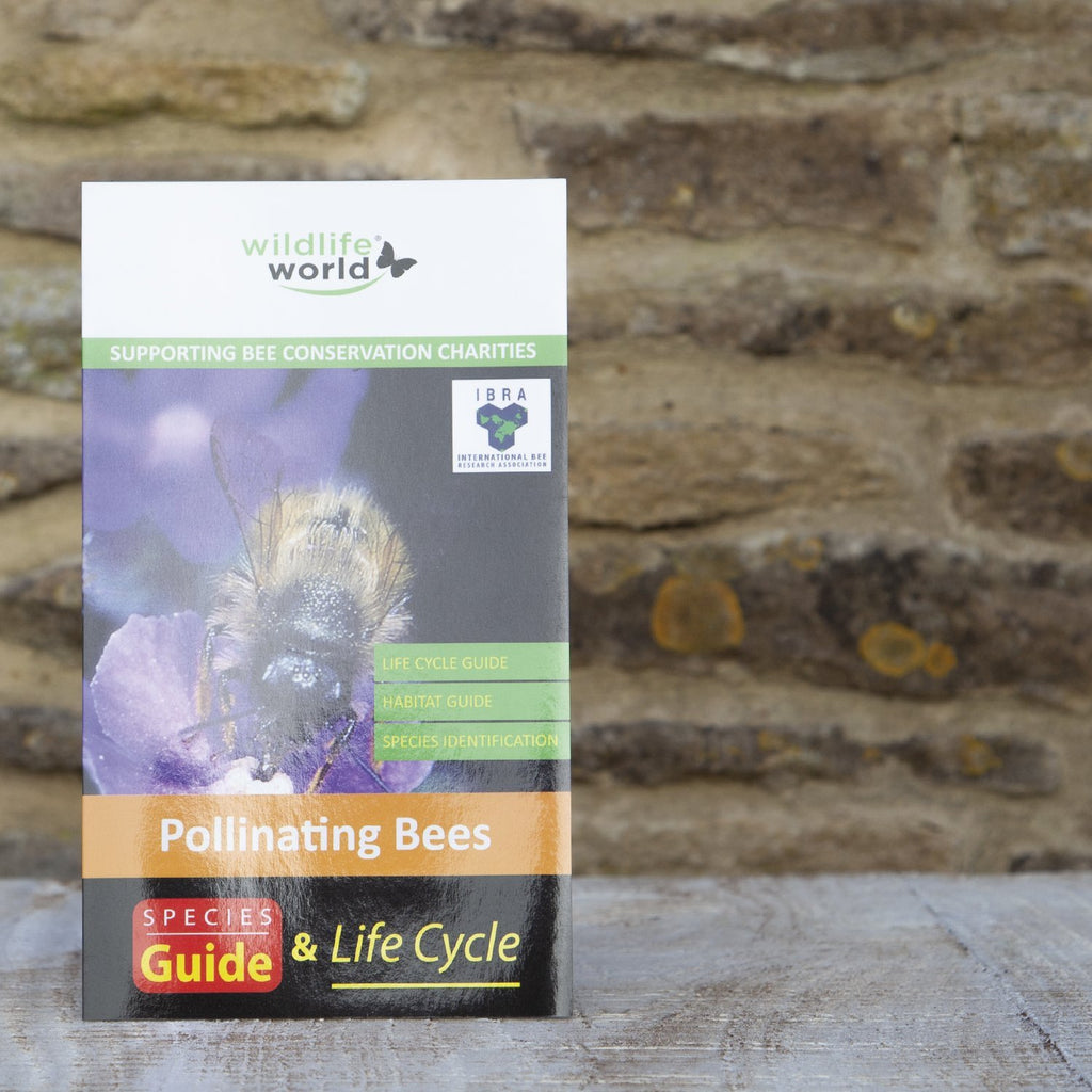 UK Guide to Pollinating Bees Wildlife World
