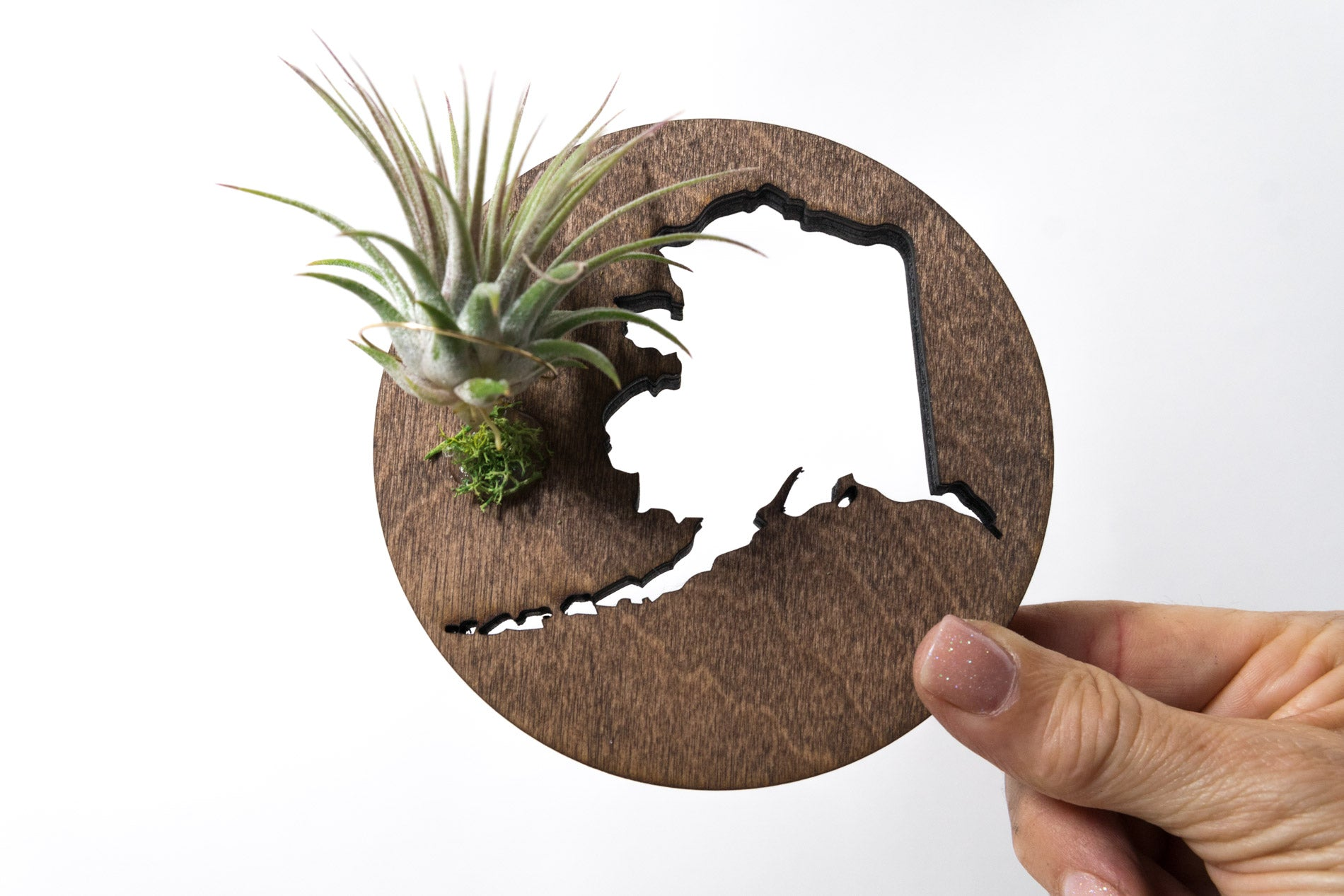 Alaska State Wooden Cut Out Magnet  + Air Plant