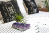 Statement Amethyst + Air Plant