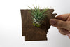 Arkansas State Wooden Cut Out Magnet  + Air Plant