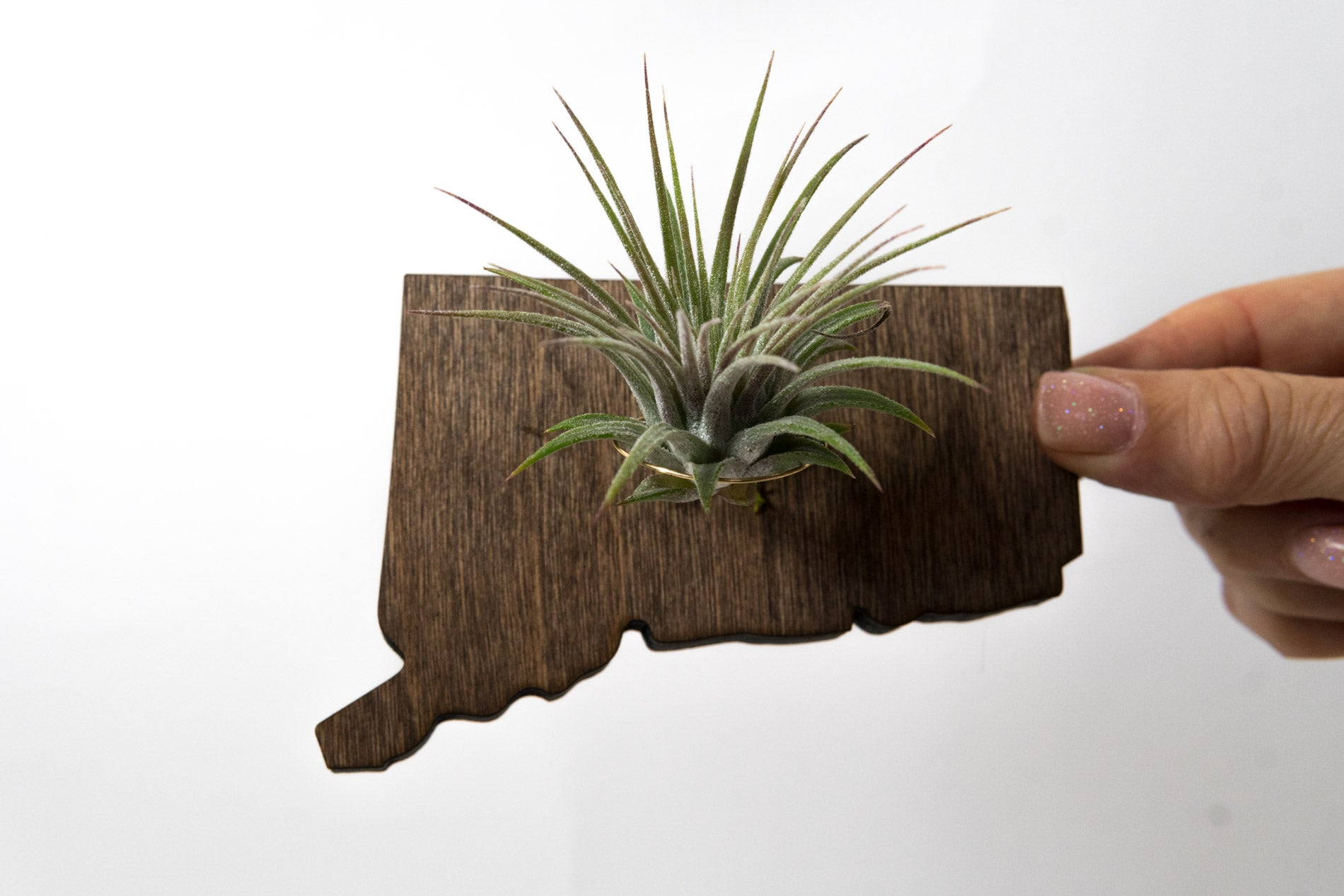 Connecticut State Wooden Cut Out Magnet  + Air Plant