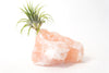 Himalayan Salt Crystal + Air Plant