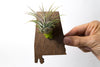 Alabama State Wooden Cut Out Magnet  + Air Plant