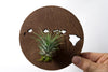 Hawaii State Wooden Cut Out Magnet  + Air Plant