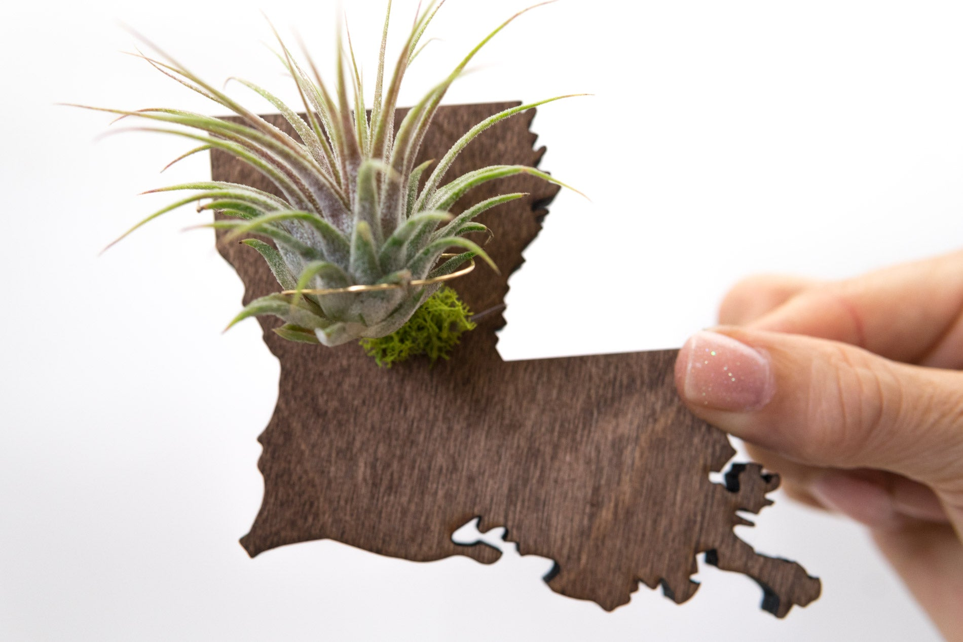 Louisiana State Wooden Cut Out Magnet  + Air Plant