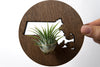 Massachusetts State Wooden Cut Out Magnet  + Air Plant