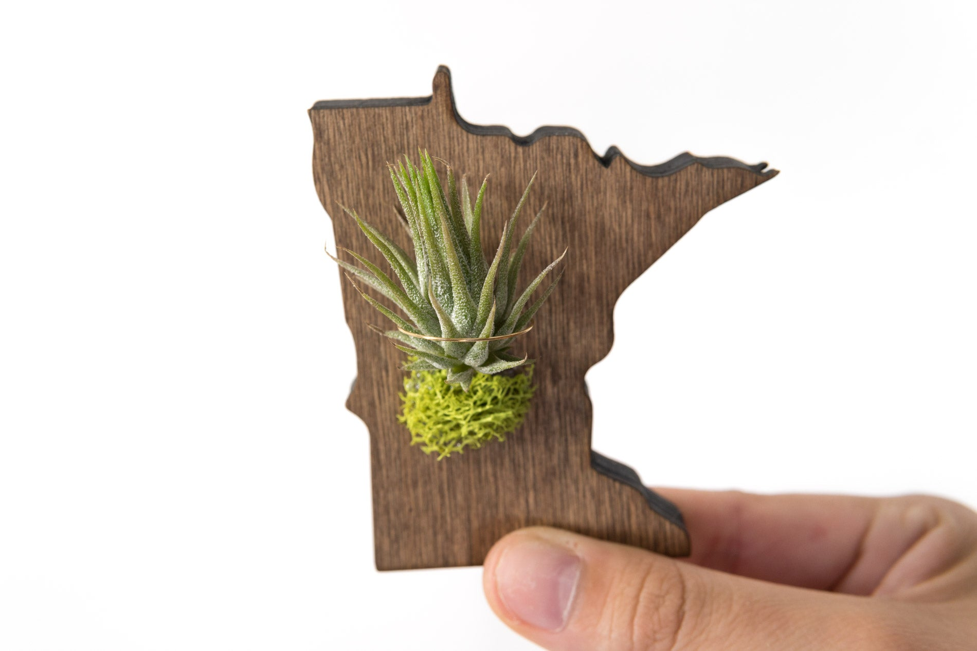Minnesota State Wooden Cut Out Magnet  + Air Plant