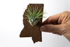 Mississippi State Wooden Cut Out Magnet  + Air Plant