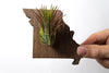 Missouri State Wooden Cut Out Magnet  + Air Plant