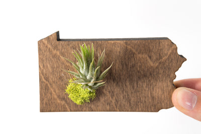 Pennsylvania State Wooden Cut Out Magnet  + Air Plant