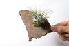 South Carolina State Wooden Cut Out Magnet  + Air Plant