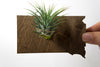 South Dakota State Wooden Cut Out Magnet  + Air Plant