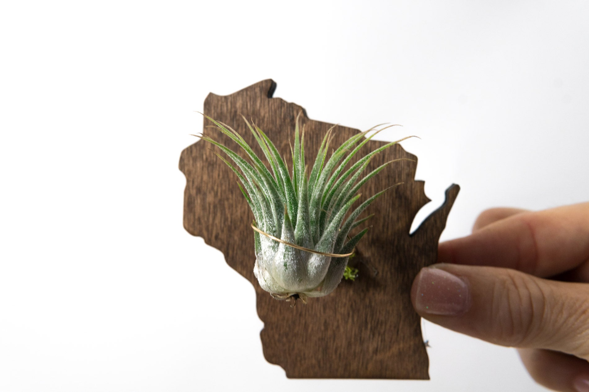 Wisconsin Wooden Cut Out Magnet  + Air Plant