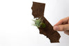 California State Wooden Cut Out Magnet  + Air Plant
