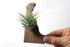 Delaware State Wooden Cut Out Magnet  + Air Plant