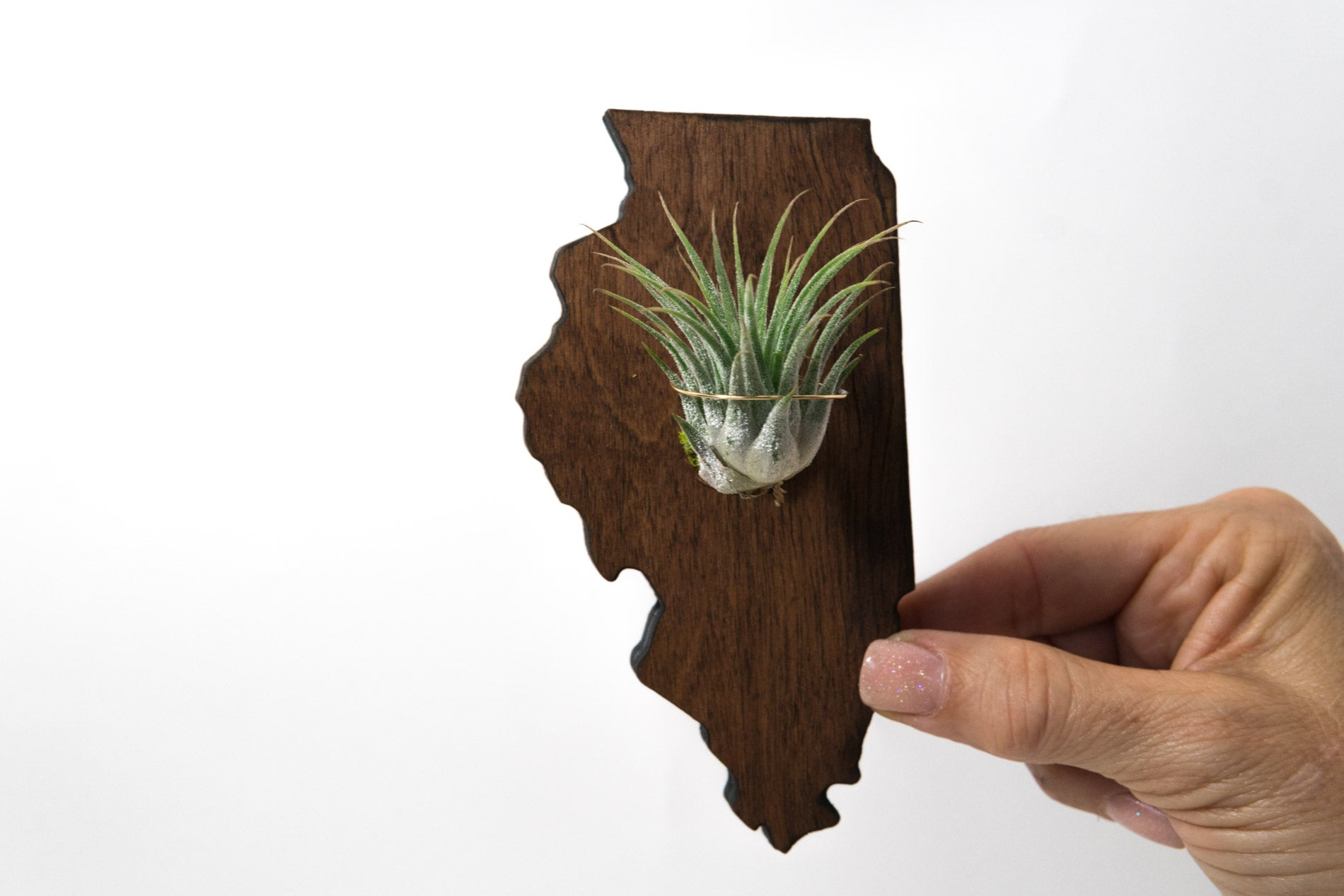 Illinois State Wooden Cut Out Magnet  + Air Plant