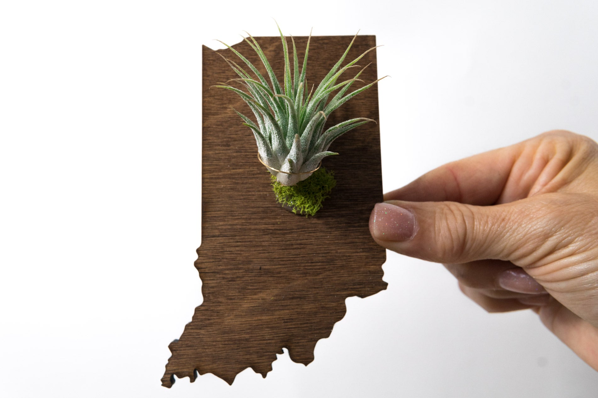 Indiana State Wooden Cut Out Magnet  + Air Plant
