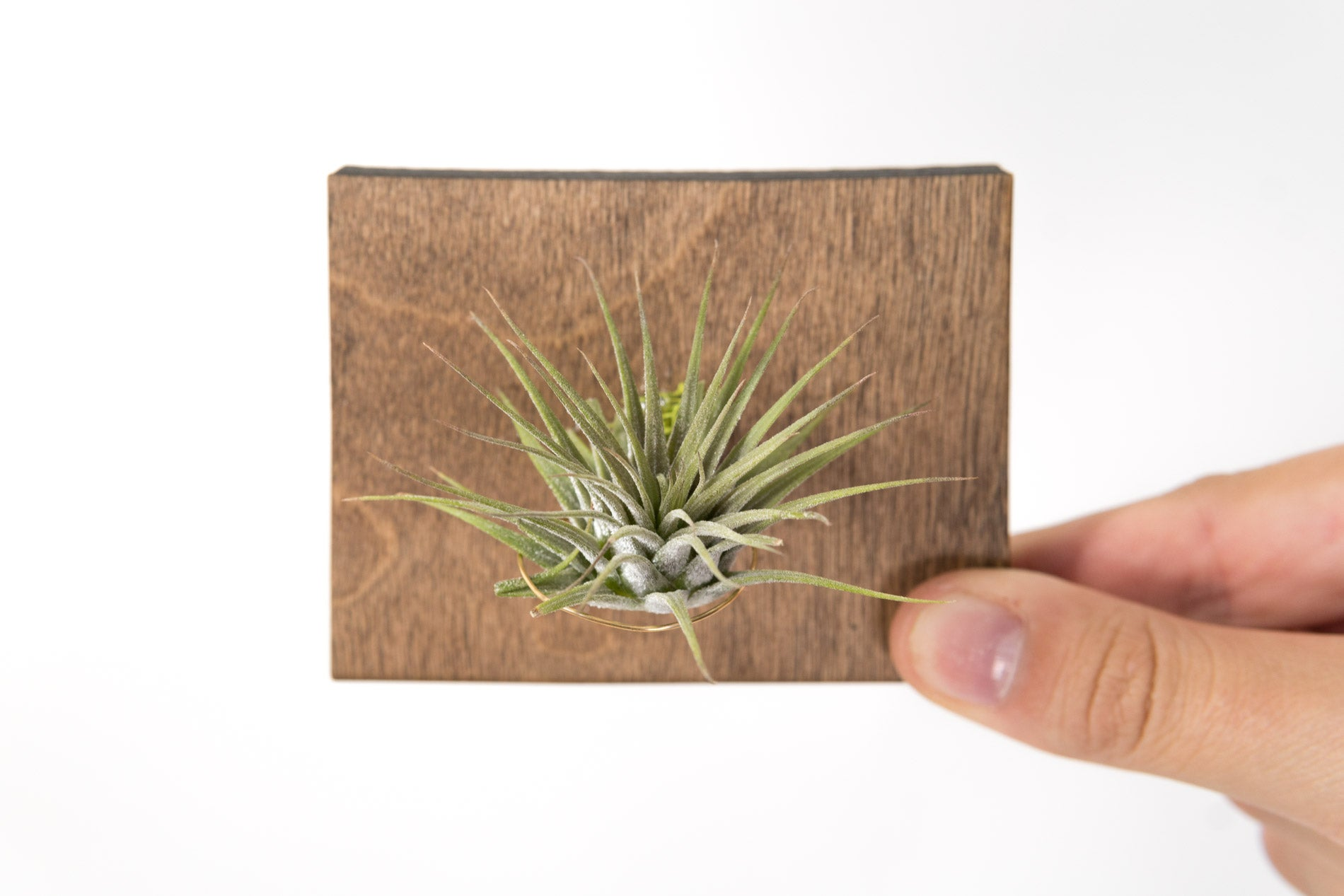 Wyoming State Wooden Cut Out Magnet  + Air Plant