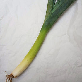 Organic Leek, sold individually