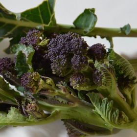 Organic Purple Sprouting Broccoli, approx 250g