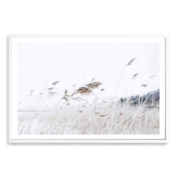 Reeds In The Breeze Art Print No.1