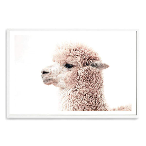 Cream Llama Photographic Wall Art Print or Poster By The Paper Tree.