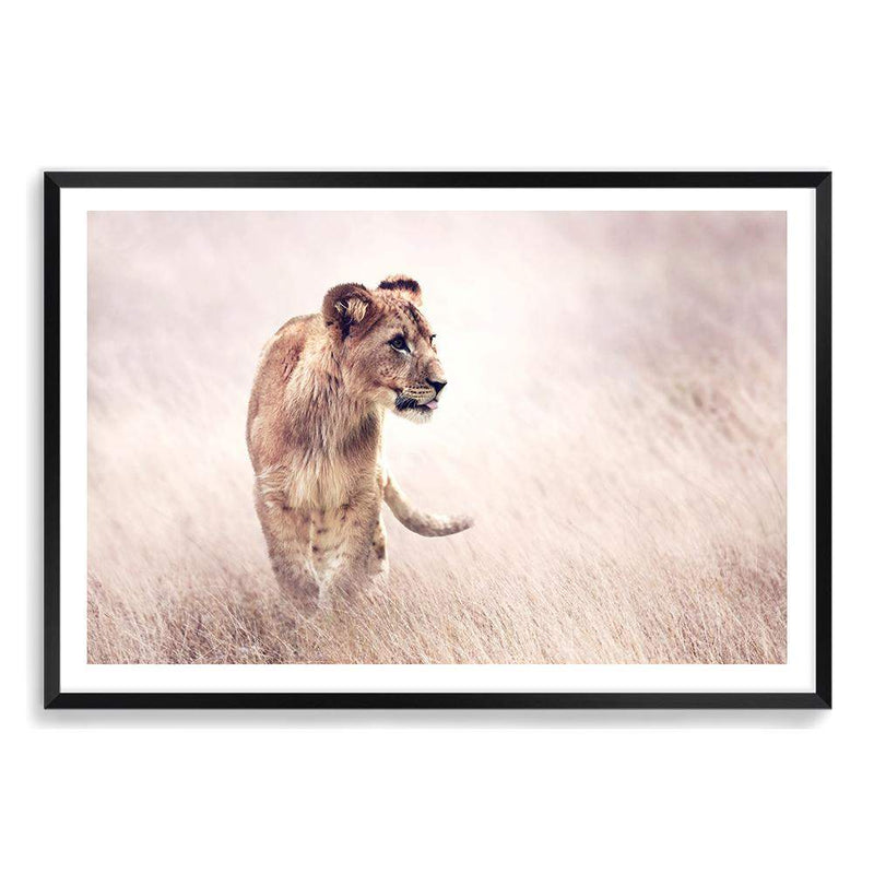 Lion On The Prowl Art Print No.1