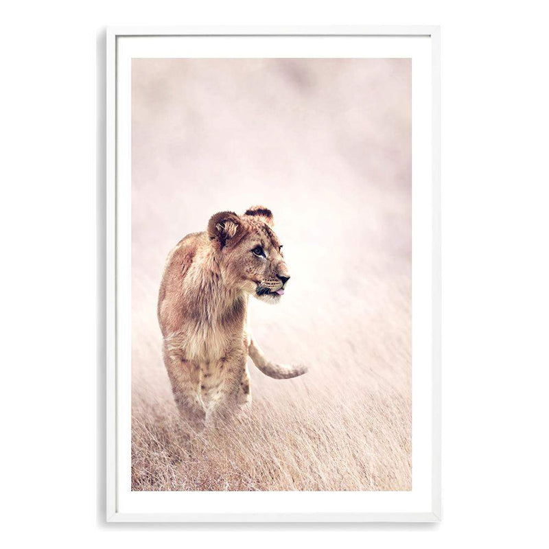 Lion On The Prowl Art Print No.2