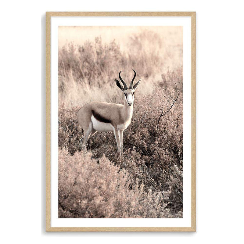 Grazing Springbok Art Print No.1