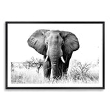 The Elephant Art Print No.1