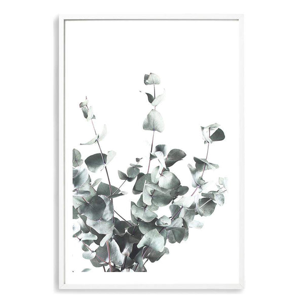 Eucalyptus Leaves Photographic Wall Art Print or Poster By The Paper Tree.