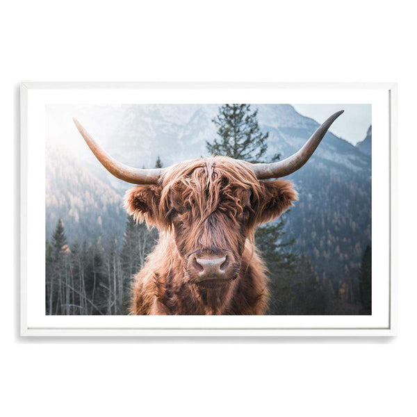 Humphrey The Highland Bull Photographic Wall Art Print or Poster By The Paper Tree.