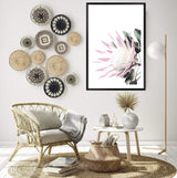 Pink King Protea Art Print in a Black Frame In a lounge Room