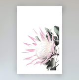 Pink King Protea Art Print