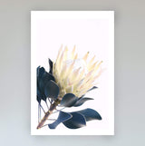 Yellow Protea Flower Art Print
