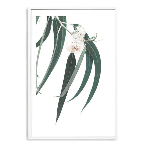 White Eucalyptus Flower Photographic Wall Art Print or Poster By The Paper Tree.