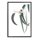 White Eucalyptus Flower Art Print No.2