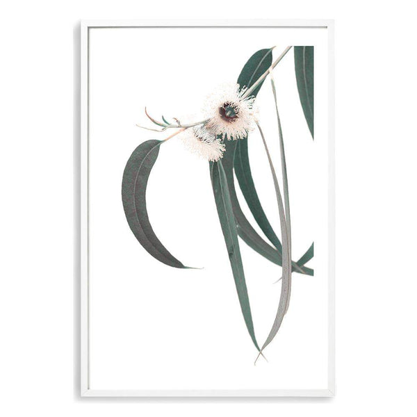 White Eucalyptus Flower II Photographic Wall Art Print or Poster By The Paper Tree.