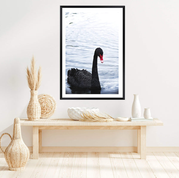 Black swan photographed art print of a black swan on a lake in a black frame in an entry